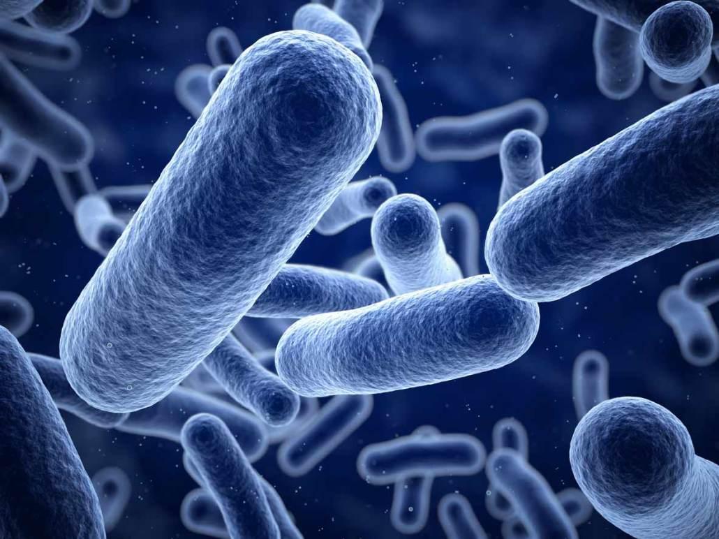 Infezioni da listeria in aumento negli over 75 e in gravidanza | @nmvi Oggi